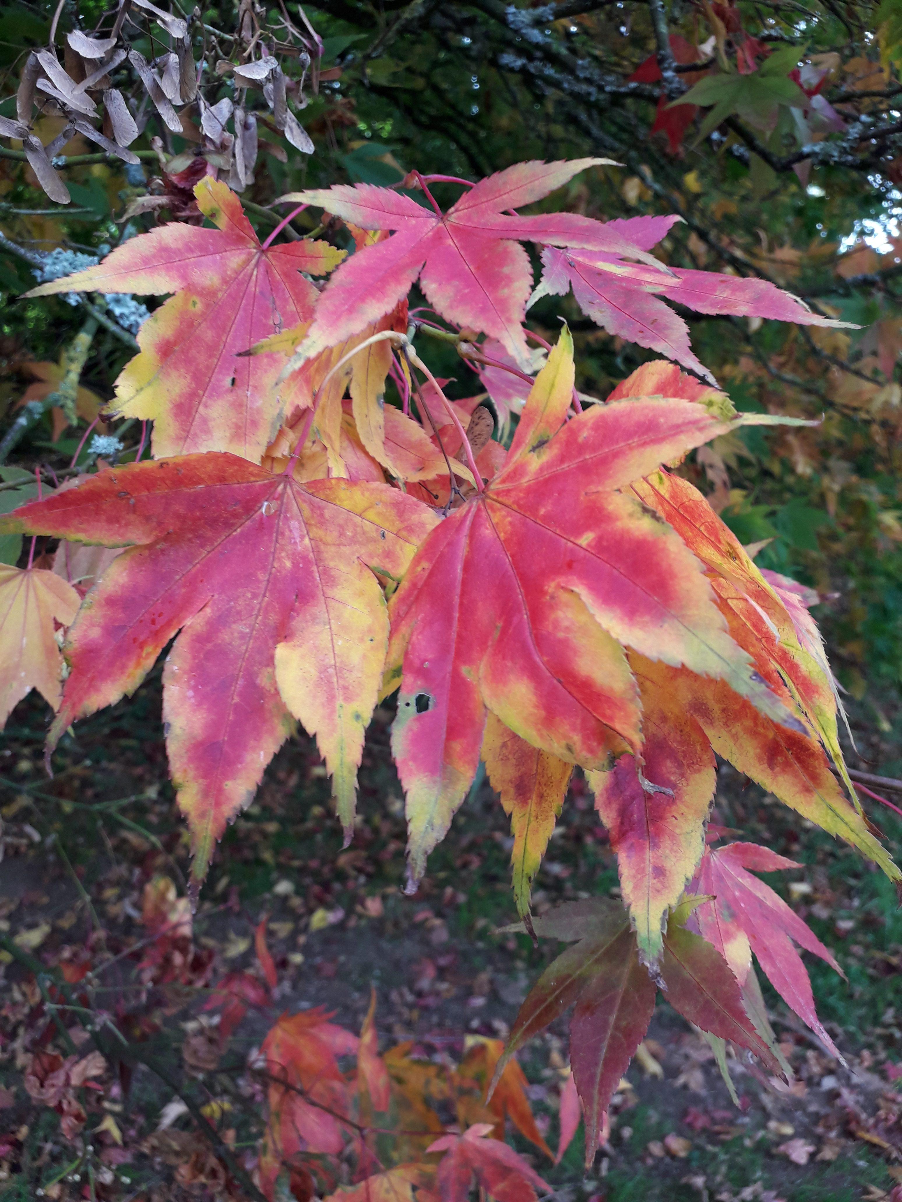 Autumn leaves - Autumn tree art